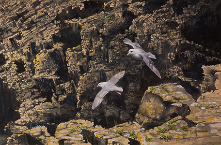 Flying Fulmars
