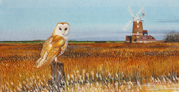 Barn Owl At Cley Mill